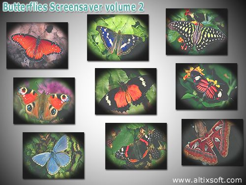 Butterflies Screensaver volume 2 Screenshot 1