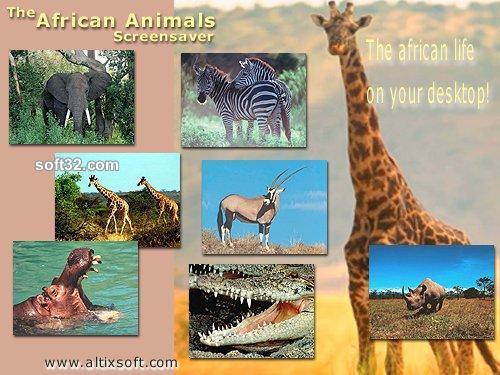 African Animals Screensaver Screenshot 3