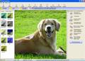 Photolightning photo software 1