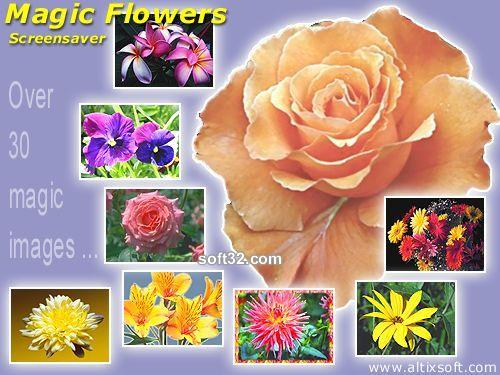 Magic Flowers Screensaver Screenshot 2