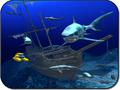 SharkVisions 1