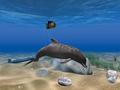 Dolphin Aqua Life 3D Screensaver 1