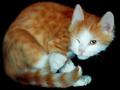 Lovely Cats screensaver 1