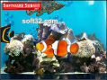 Aquarium Screensaver by Server Connectix 3