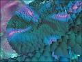 Rainbow Serpent 3D Screensaver 1