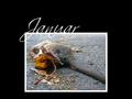 Tier und Verderben 2004 1