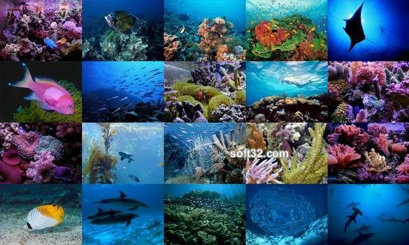 Ocean Life Photo Screensaver Screenshot 2