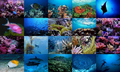 Ocean Life Photo Screensaver 1