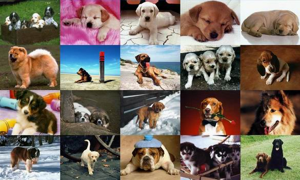 Dogs Photo Screensaver Screenshot