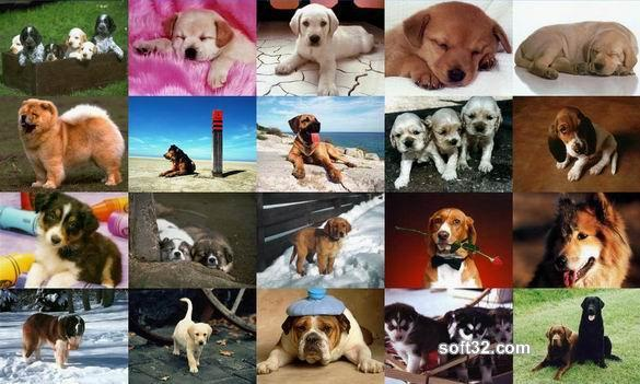 Dogs Photo Screensaver Screenshot 3