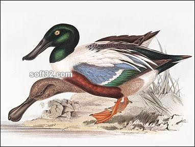 John Gould Ducks and Waterfowl Screensaver Screenshot 2