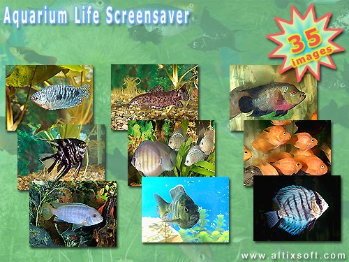 Aquarium Life Screensaver Screenshot