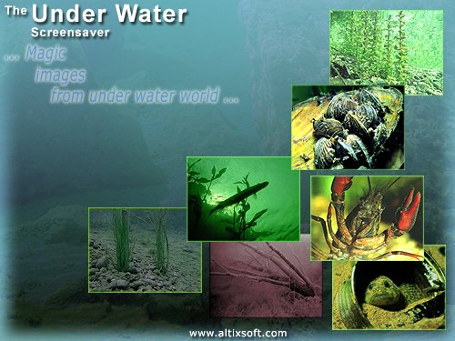 Under Water Screensaver Screenshot 1