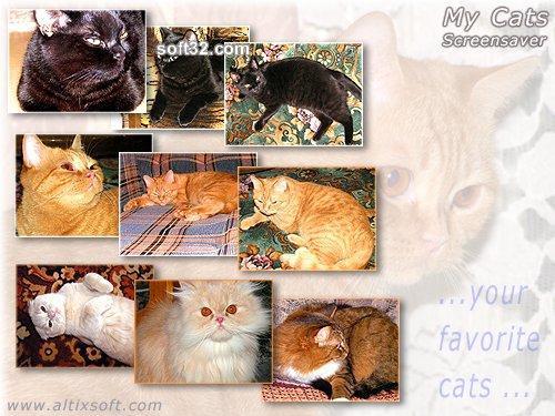 My Cats Screensaver FREE Screenshot 2