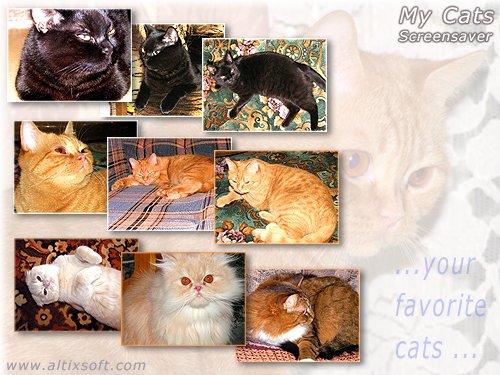 My Cats Screensaver FREE Screenshot 1