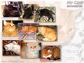 My Cats Screensaver FREE 1