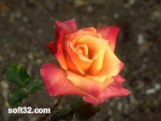 100 Beautiful flowers Vol. 1 Screenshot 3
