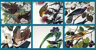 Audubon Close Up - Birds and Flowers Screenshot 1