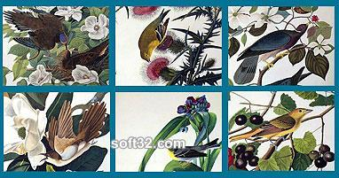 Audubon Close Up - Birds and Flowers Screenshot 2