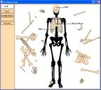 Skeleton - Bone Builder 1