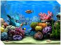 Living Marine Aquarium 1