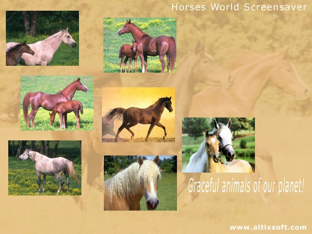 Horses World Screensaver Screenshot