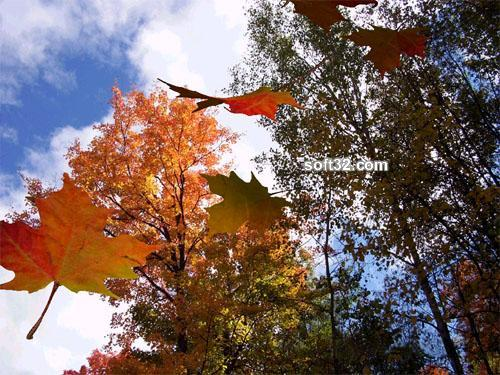 Autumnleaves3D Screensaver Screenshot 2