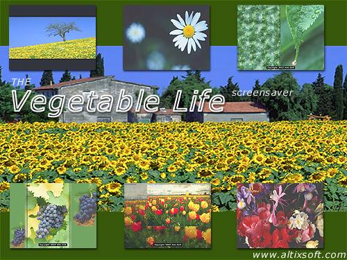 Vegetable Life Screensaver Screenshot
