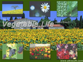 Vegetable Life Screensaver 1