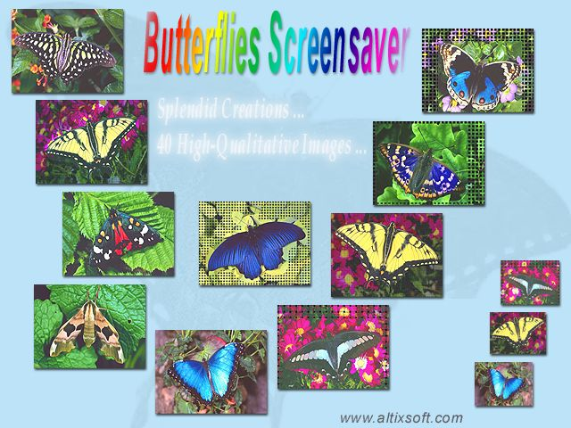 Butterflies Screensaver Screenshot 1