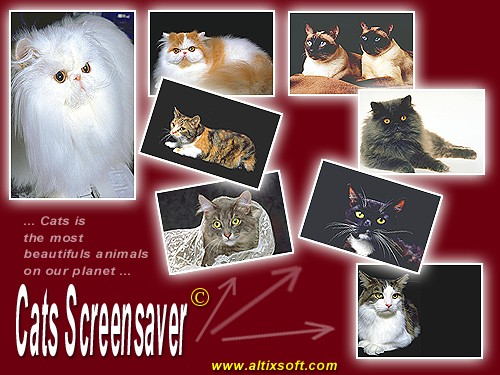 Cats Screensaver Screenshot