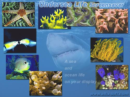 Undersea Life Screensaver Screenshot 1