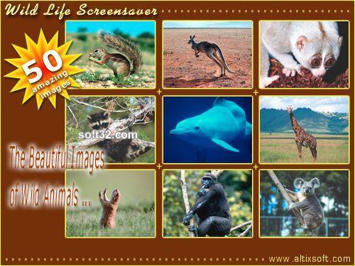 Wild Life Screensaver Screenshot 2