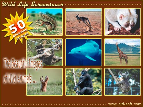 Wild Life Screensaver Screenshot