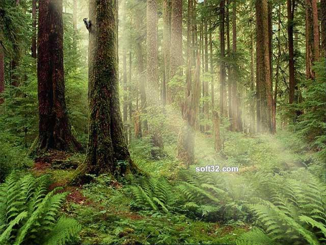 Serenity Forest Screensaver Screenshot 2