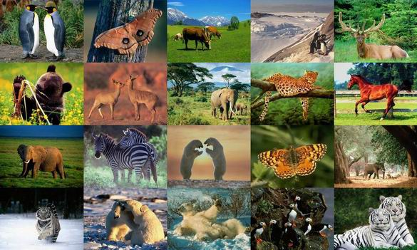 Animals Photo Screensaver Volume 1 Screenshot 1