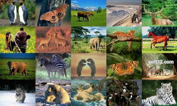 Animals Photo Screensaver Volume 1 Screenshot 2