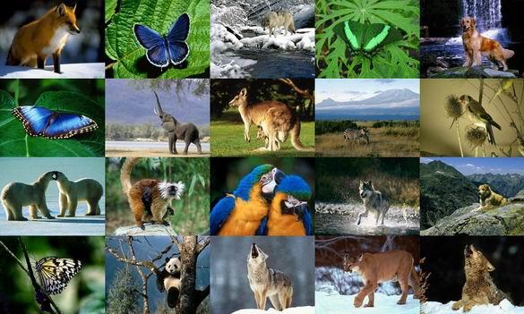 Animals Photo Screensaver Volume 2 Screenshot 1