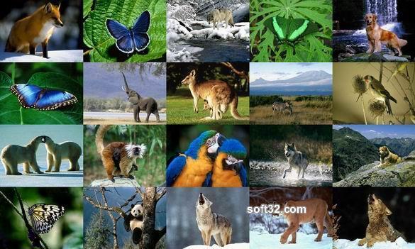 Animals Photo Screensaver Volume 2 Screenshot 2