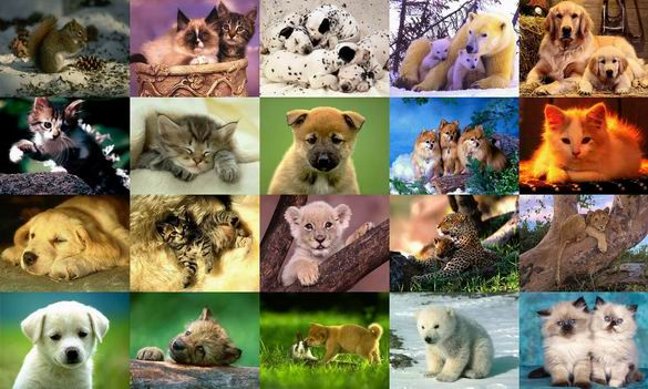 Animals Photo Screensaver Volume 3 Screenshot 1
