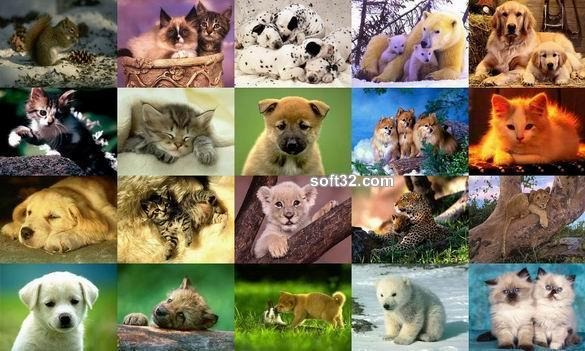 Animals Photo Screensaver Volume 3 Screenshot 2