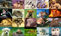 Animals Photo Screensaver Volume 3 1