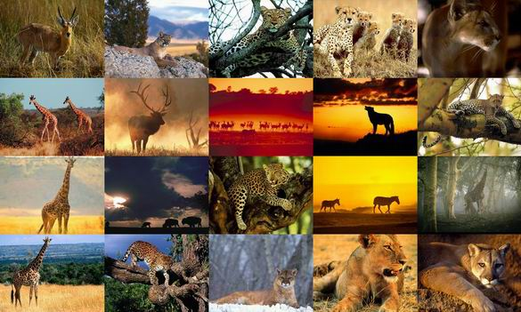 Animals Photo Screensaver Volume 4 Screenshot