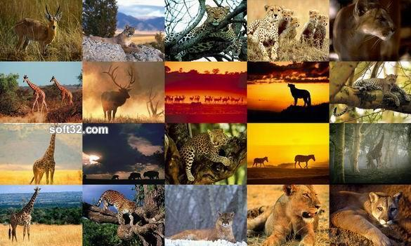 Animals Photo Screensaver Volume 4 Screenshot 2