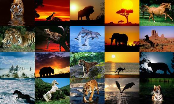 Animals Photo Screensaver Volume 5 Screenshot