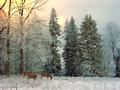 Snowland Screensaver 1