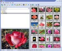 Able Image Browser Screenshot 1
