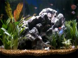 Fish Aquarium Video Screensaver Screenshot