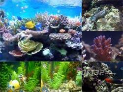 Fish Aquarium Video Screensaver Screenshot 2