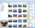 Photo Manager 2010 Standard 1